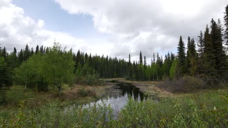 Alaska-Spruce-Forest-Clouds-And-Water