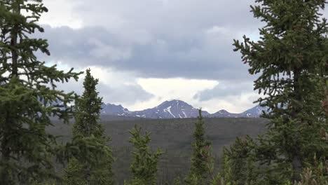 Alaska-Zoom-En-Montaña-Pasado-árboles-Acercar