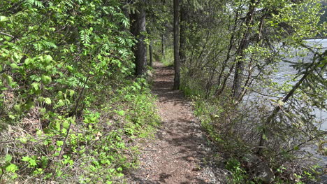 Alaska-Zooms-On-Path-In-Forest