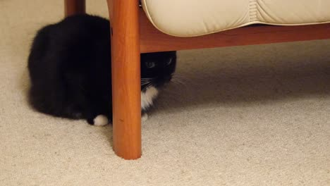 Black-Cat-Hides-Under-Sofa-Then-Runs