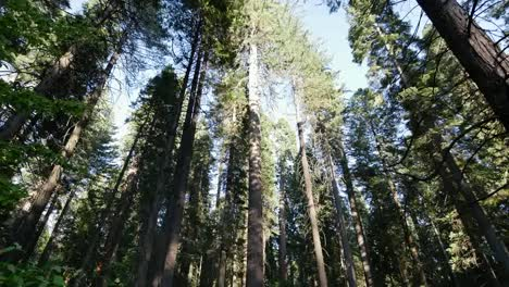 California-Calaveras-Big-Trees-Tilt-Up