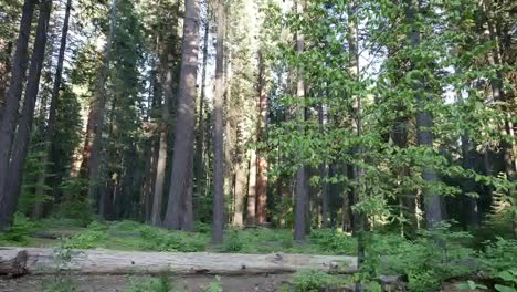 California-Fallen-Tree-And-Forest