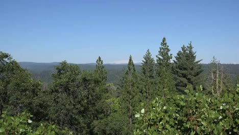 California-Forest-Zoom-Out
