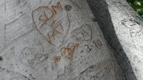 California-Initials-In-Tree-Trunk