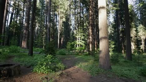 California-Path-In-Forest