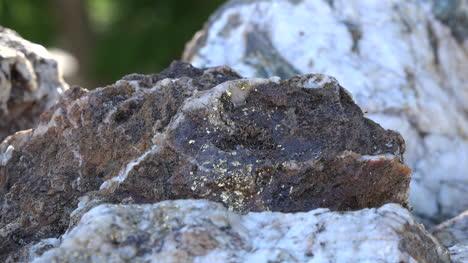 California-Rock-With-Gold-Flecks