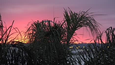 California-Sunset-And-Palms