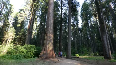 California-Tourists-On-Path-In-Forest