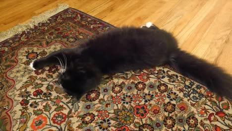 Cat-On-An-Oriental-Rug
