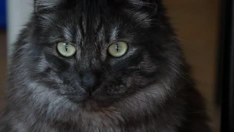 Eyes-Of-A-Grey-Cat