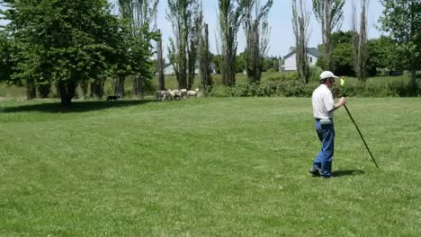 Oregon-Man-Watches-While-Dog-Herds-Sheep