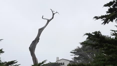 California-17-Mile-Drive-Ghost-Tree-With-House-Zoom-Out