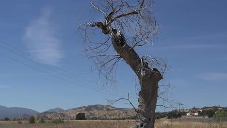 California-Fort-Hunter-Liggett-árbol-Muerto-Por-Carretera-Inclinar-Hacia-Arriba