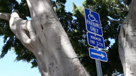 California-Tree-Next-To-Sign