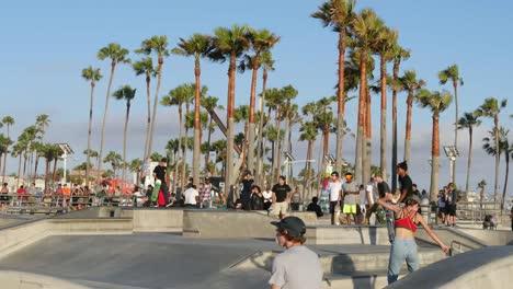 Los-Angeles-Venice-Beach-Skate-Park-With-Palms-Beyond