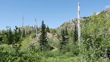 Washington-Dead-Trees-Near-Mt-St-Helens-Pan