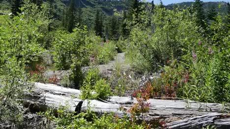 Washington-Log-And-View-Near-Mt-St-Helens-Pan