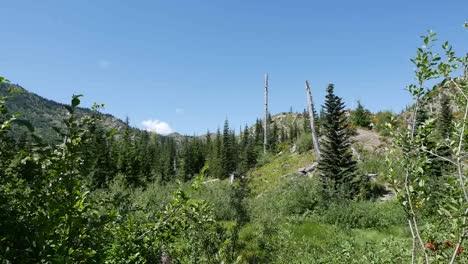 Washington-Mt-St-Helens-Devastation-Zone-Reborn-Zoom