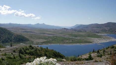 Washington-Wildblumen-Und-Spirit-Lake-Herauszoomen
