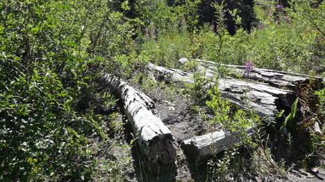Washington-Dead-Logs-Pan