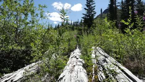 Washington-Logs-On-Ground-Pan