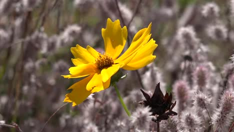 Washington-Yellow-Flower-Zoom-And-Pan