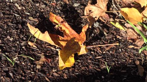 Naturaleza-Acurrucada-Hoja-Amarilla-En-El-Suelo