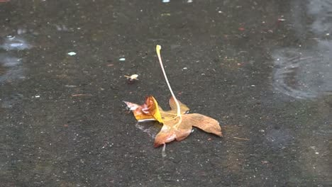 Nature-Dead-Leaf-Floating-In-The-Rain