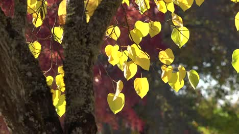 Nature-Dramatic-Yellow-Leaves