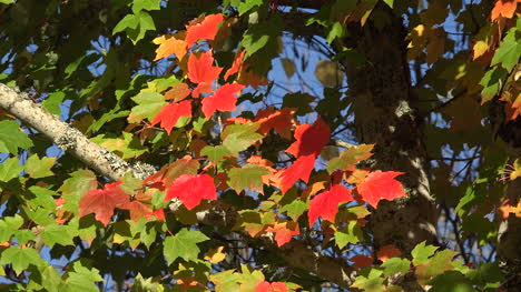Nature-Fly-And-Fall-Leaves
