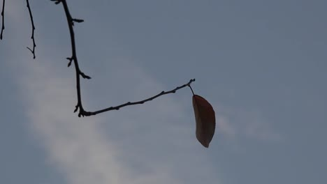 Nature-Lonely-Leaf-Zooms-In