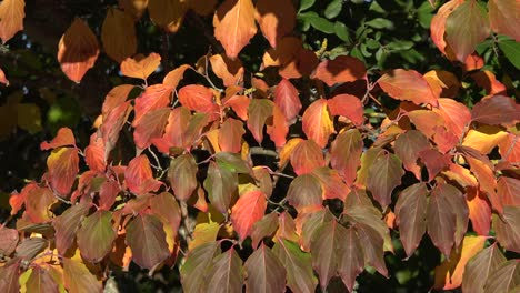 Nature-Multicolored-Fall-Leaves