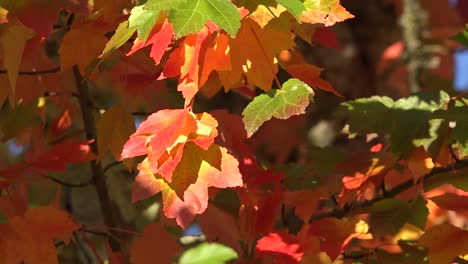 Nature-Red-And-Yellow-Leaves