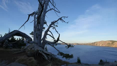 Oregon-Crater-Lake-And-Dead-Tree