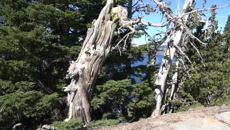 Oregon-Crater-Lake-Dead-Trees
