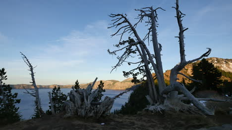 Oregon-Crater-Lake-Framed-By-Dead-Tree-In-Evening
