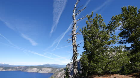Oregon-Crater-Lake-Pan-With-Dead-Tree