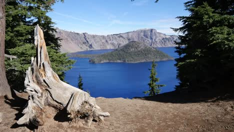 Oregon-Crater-Lake-Tree-Root-Frames-Wizard-Island