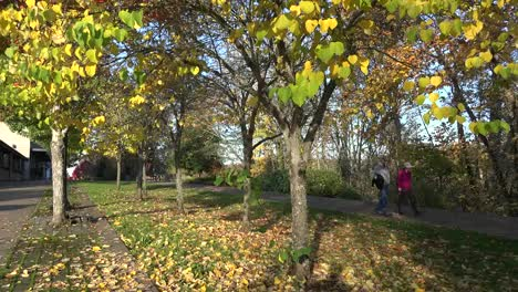 Oregon-Couple-On-A-Fall-Path
