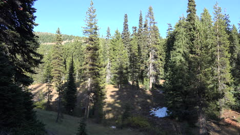 Vista-Del-Bosque-De-Oregon-Con-Cielo-Azul