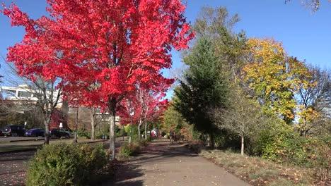 Oregon-Man-On-A-Bicycle-In-The-Fall