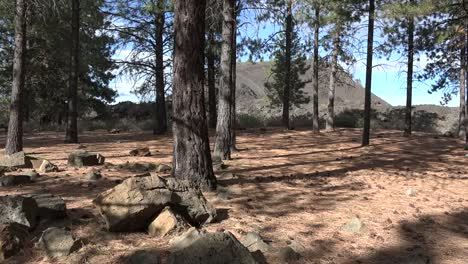 Oregon-Pine-Trees-With-Lava-Butte-Beyond