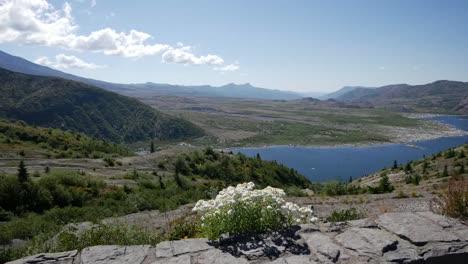 Washington-Wildblumen-Und-Spirit-Lake
