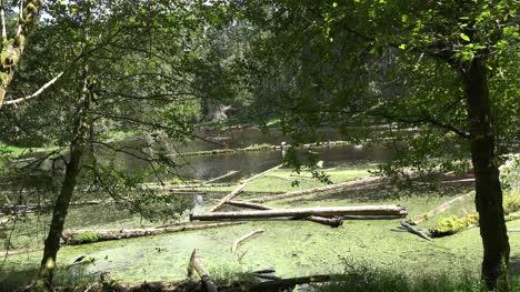 Washington-Passing-Logs-In-Swamp