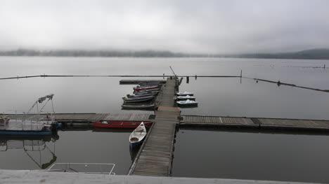 Washington-Zooms-On-Bird-On-Dock