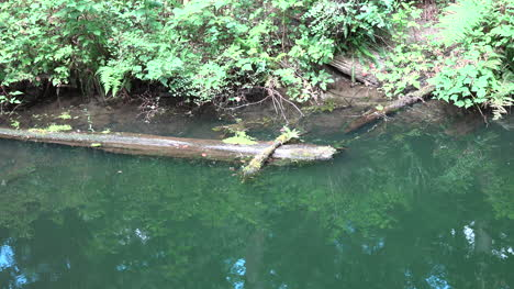Washington-Zooms-On-Log-In-Swampy-Water