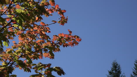 Washington-Zooms-On-Red-Leaves