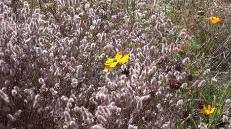 Washington-Zooms-On-Yellow-Flower