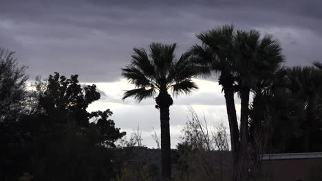 Arizona-Palms-And-White-And-Grey-Sky