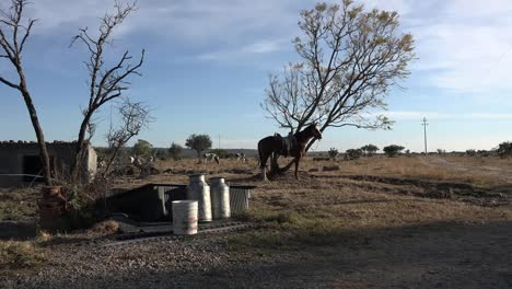 Mexico-Jalisco-Horse-And-Milk-Cans-At-Rancho